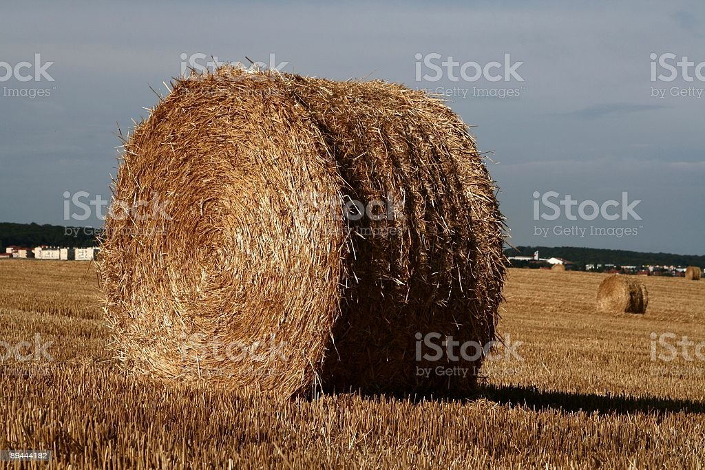Hay-whirl during the harvest royalty-free stock photo