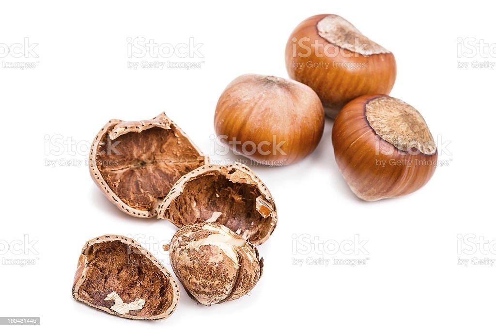 Hazelnut on white royalty-free stock photo