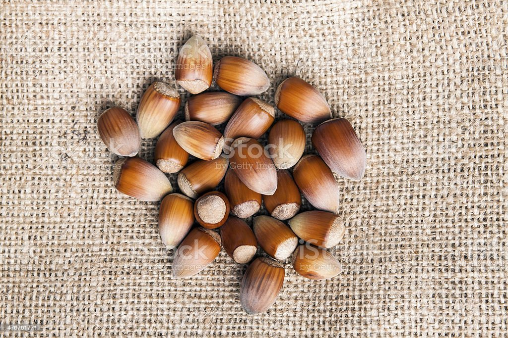 hazelnut royalty-free stock photo