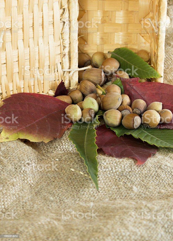 Hazelnuts and autumn foliage royalty-free stock photo