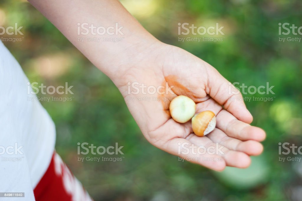 Hazelnuts concept stock photo
