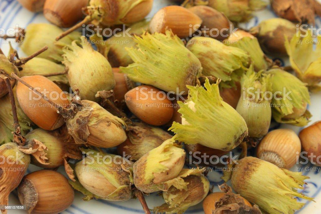 Hazelnuts picking - Foto stock royalty-free di Agricoltura