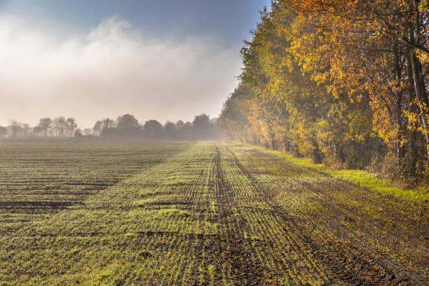 Hazy agricultural november landscape stock photo