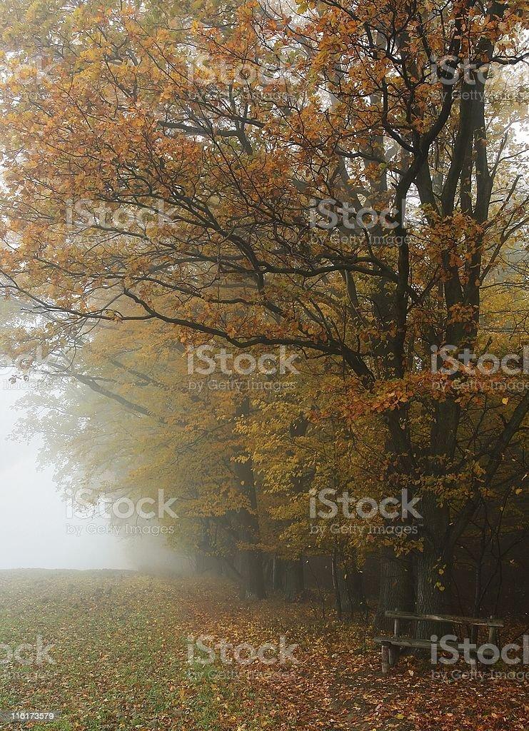 Hazy autumnal forest royalty-free stock photo