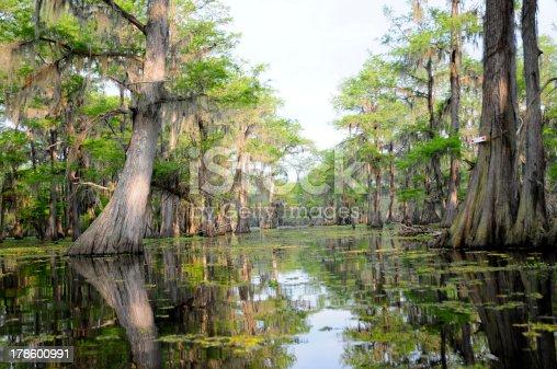 A shot of a beautiful, pristine Louisiana swamp in hazy evening light