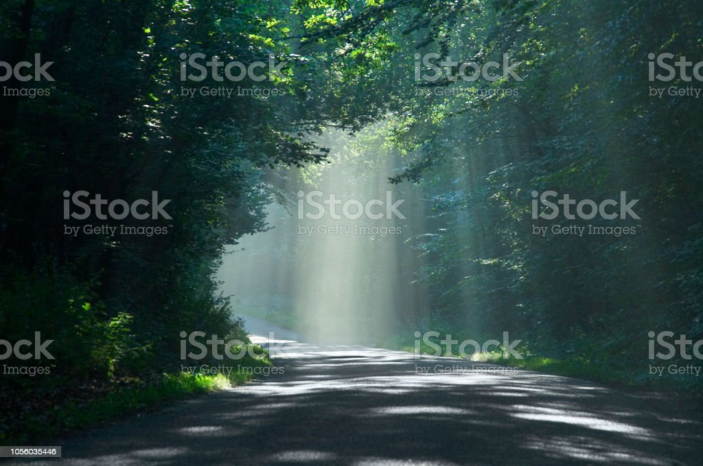 Hazy light in forest stock photo