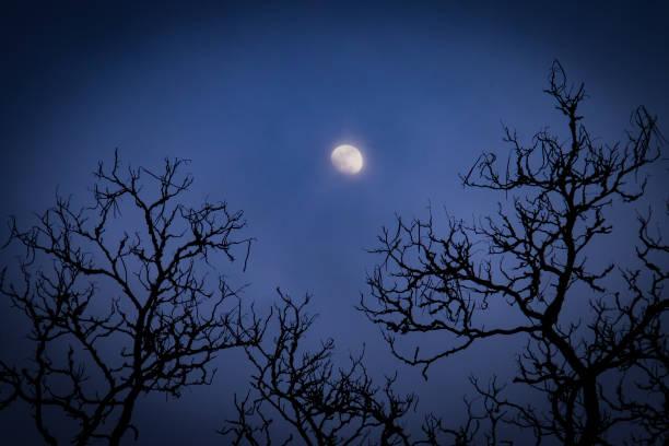 Hazy Moon stock photo