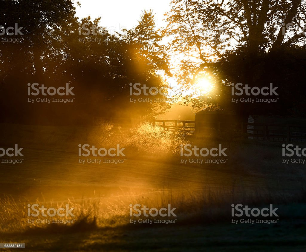 Hazy sunbeam into field in January stock photo