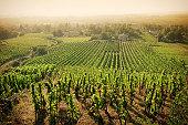 Hazy summer morning over a hillside vineyard in France's Rhône Valley.