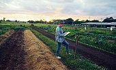 Shot of a mature farmer checking the crops on his farm