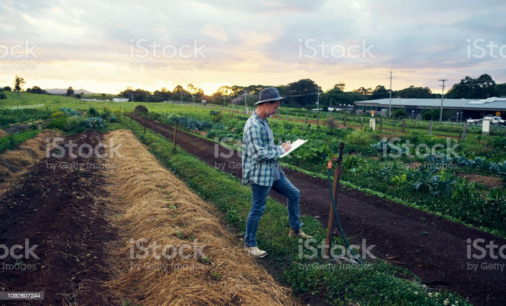 He keeps a diligent log of all his crops stock photo