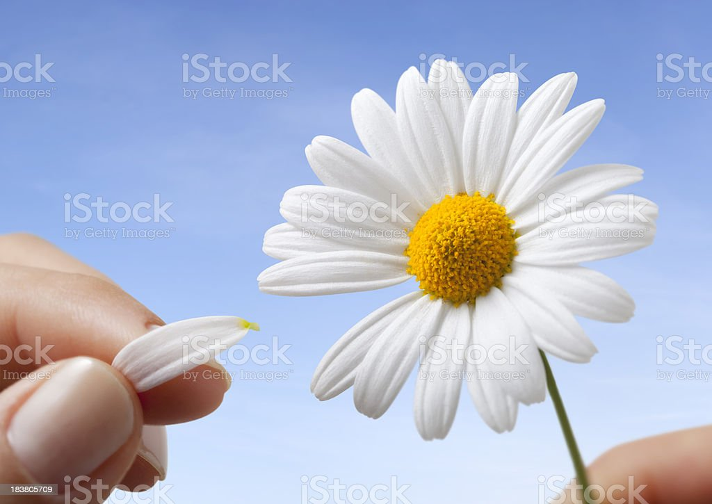 He loves me? royalty-free stock photo