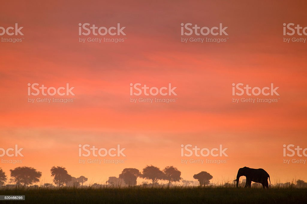 Ele sunset stock photo