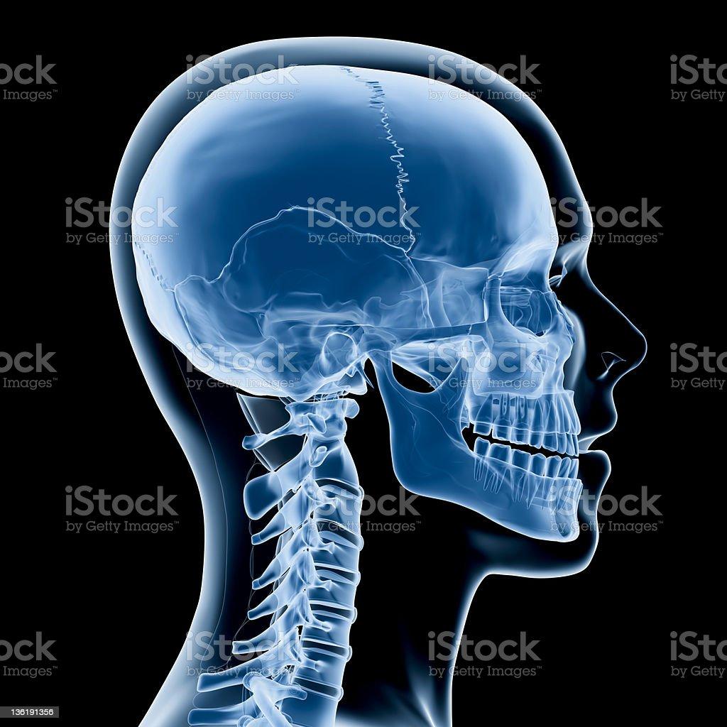 Head and neck x-ray stock photo