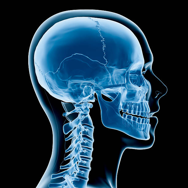 Head and neck x-ray Digital medical illustration: Lateral (side) x-ray view (orthogonal) of human skull and neck. Featuring: spine body part stock pictures, royalty-free photos & images