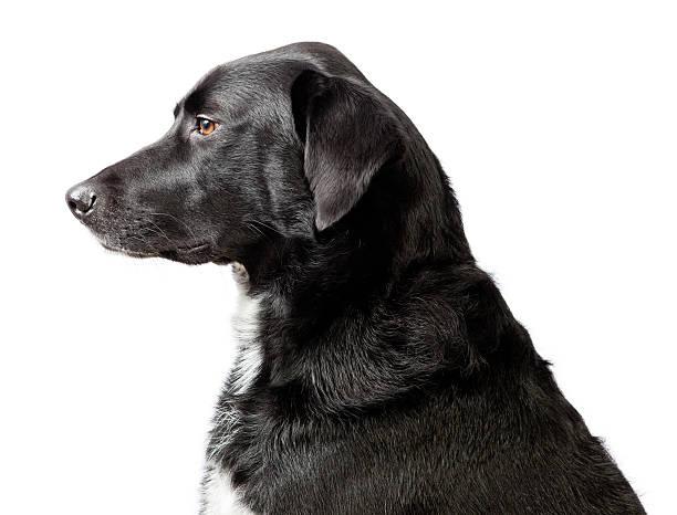 Head and shoulders dog portrait picture id172363248?b=1&k=6&m=172363248&s=612x612&w=0&h=2en1ykektr3tohsj qfwfwrewv9by3eluzj9elarx5k=
