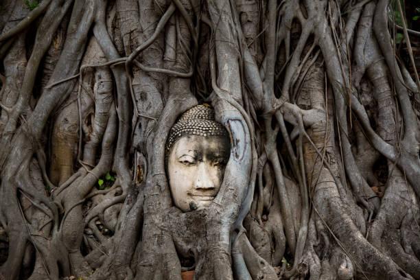 Kopf, eingehüllt in Reben in Ayutthaya – Foto