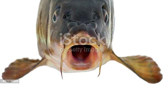 istock head fish big carp isolated on white background 897276668