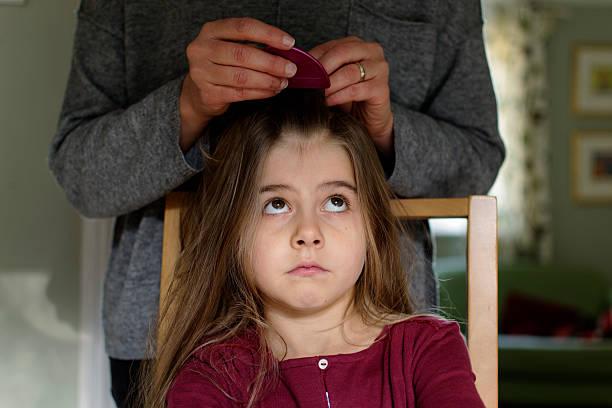tête lice - peigne photos et images de collection