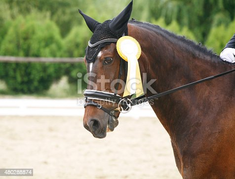 istock Head of a award-winning horse in the arena 480288874