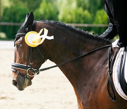 istock Head of a beautiful award-winning horse in the arena 480288848