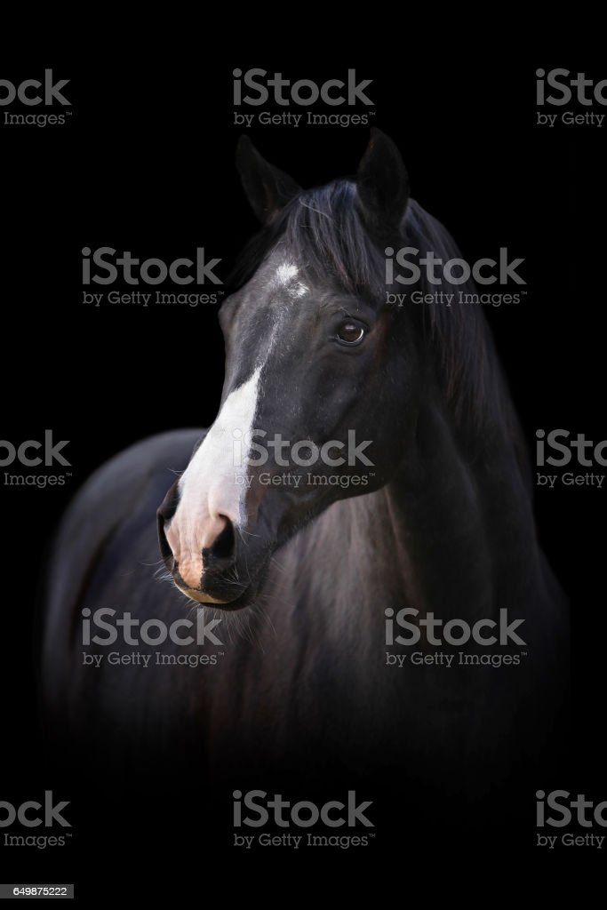 Head Of A Black Horse On Black Background Stock Photo Download Image Now Istock