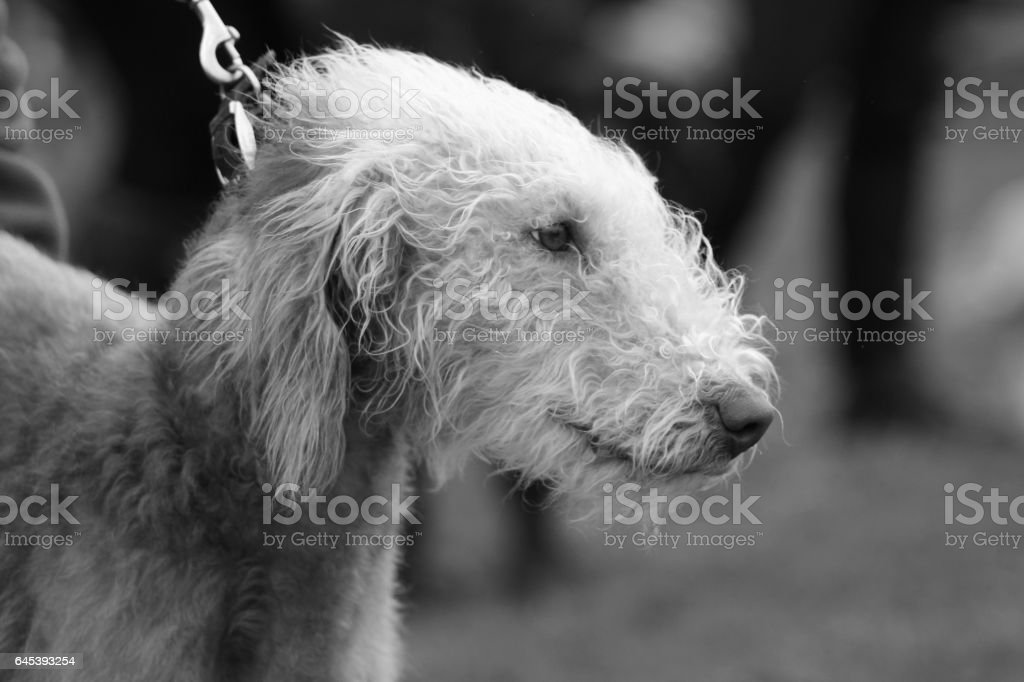 Head of a Dog stock photo