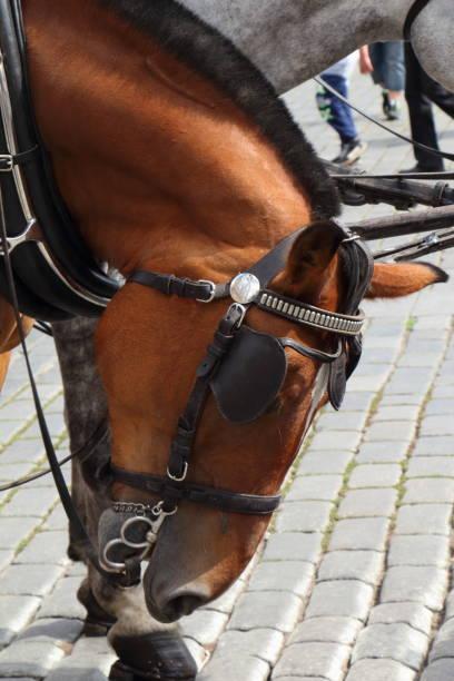 Tête d'un cheval à l'attelage à Prague - Photo