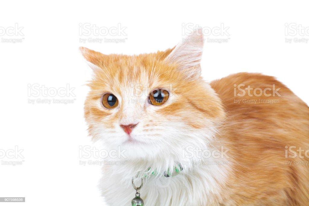 head of an orange cat stock photo