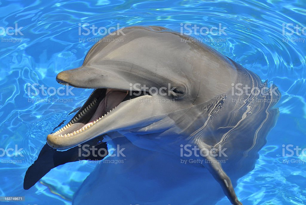 Head of  bottlenose dolphin stock photo