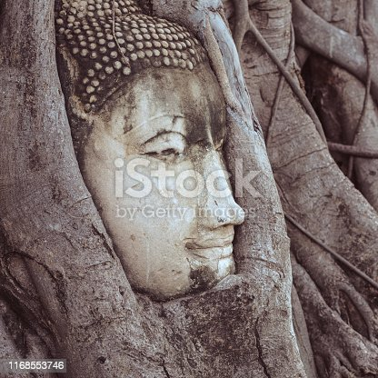 Head of Buddha twined by banyan tree roots. Closeup photo, profile portrait. Concept of enlightenment, wisdom, merging with nature & eternity. Ancient statue in Ayutthaya, Thailand.