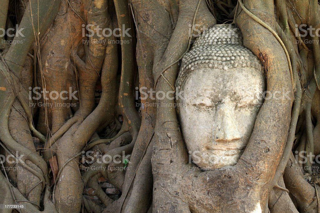 Head of Buddha image royalty-free stock photo