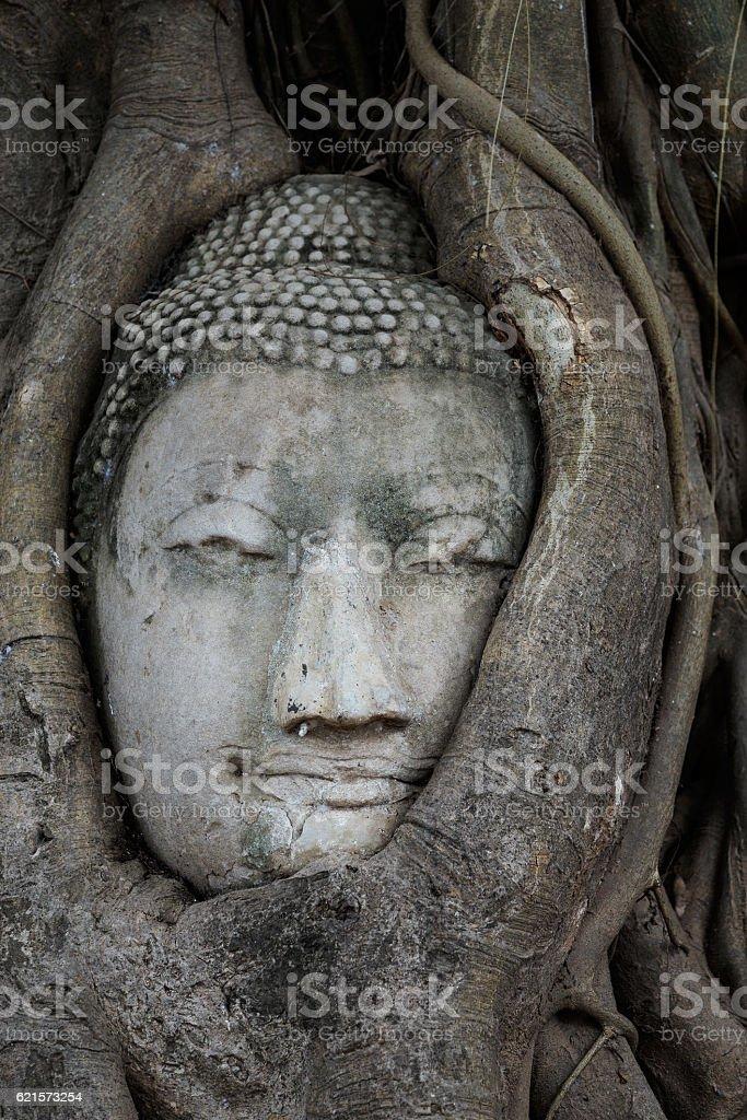 Head of Buddha in a tree trunk, Wat Mahathat photo libre de droits