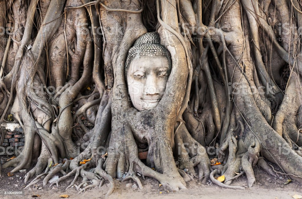 Head of Buddha statue in the tree roots at Wat Mahathat temple, stock photo