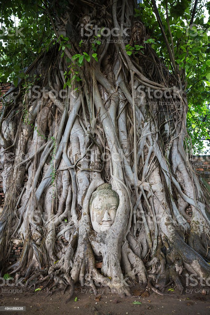 Head of Buddha statue in the tree roots at Wat Mahathat, Ayutthaya,...