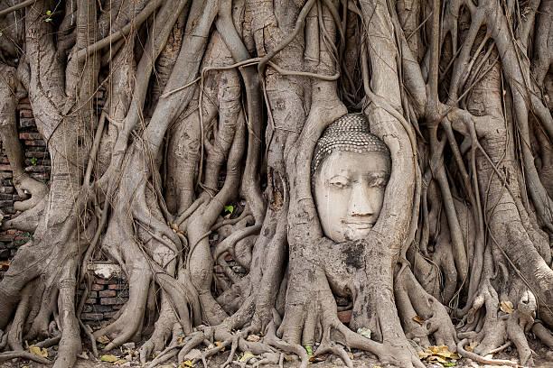 Head of Buddha-statue im Baumwurzeln – Foto