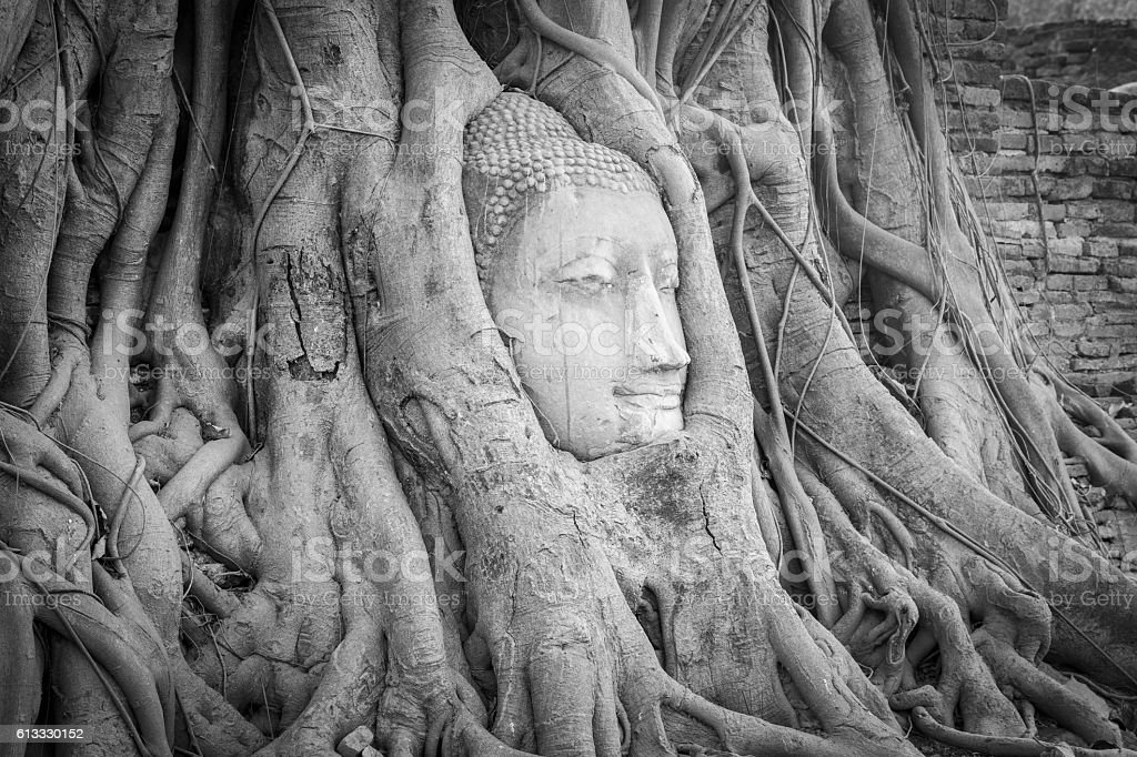 Head of Buddha statue in the tree roots at Wat Mahathat temple,...