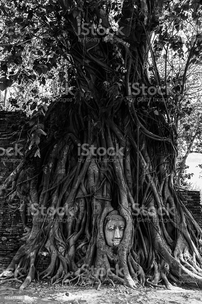 Head of Buddha statue in tree roots at Wat Mahathat, Ayutthaya...