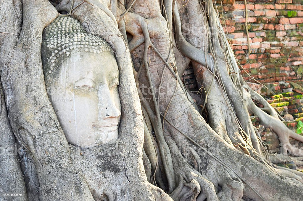 Head of buddha statue in tree roots at Wat Mahathat temple,...