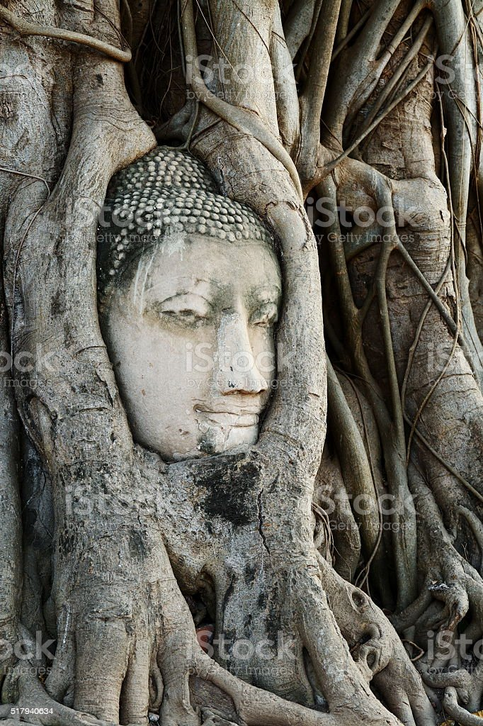 Head of Buddha Statue with the Tree Roots at Wat Mahathat, historic...