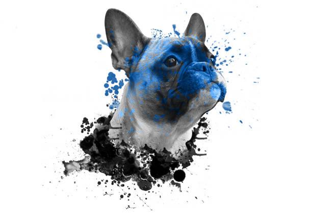 cabeça de buldogue com aquarela abstrata sobre fundo branco, para impressão em cartazes - cachorro desenho - fotografias e filmes do acervo