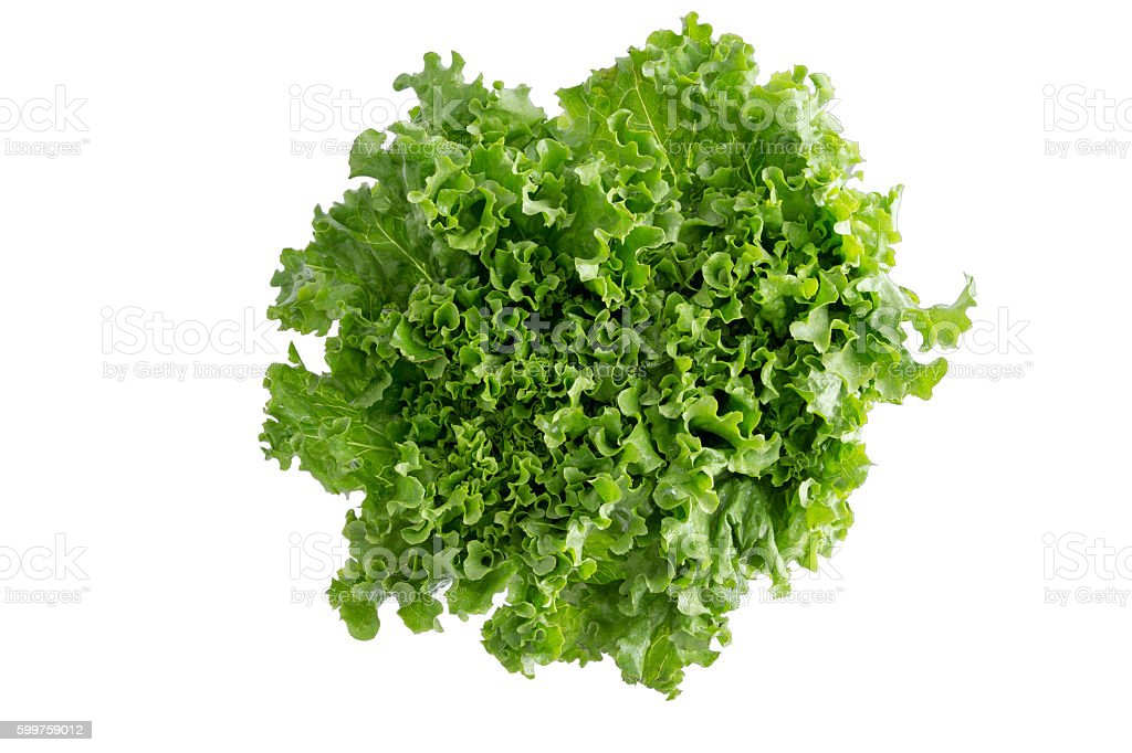 Head of crispy leafy Californian lettuce stock photo