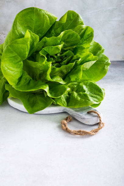 Head of fresh organic lettuce salad Head of fresh organic lettuce salad on marble cutting board on light gray stone background. Healthy food concept with copy space. butterhead lettuce stock pictures, royalty-free photos & images