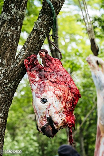 Skinned head of beef carcass