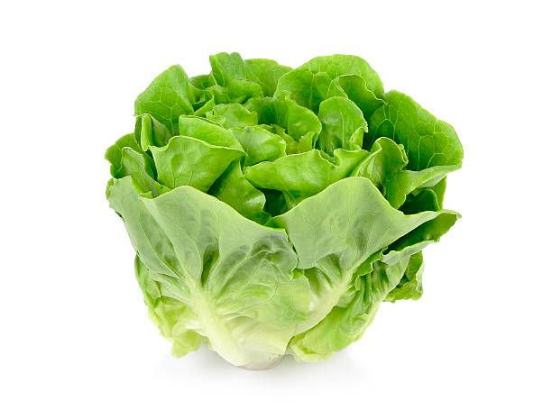 a head of green butter lettuce isolated on white background - lettuce stock photos and pictures