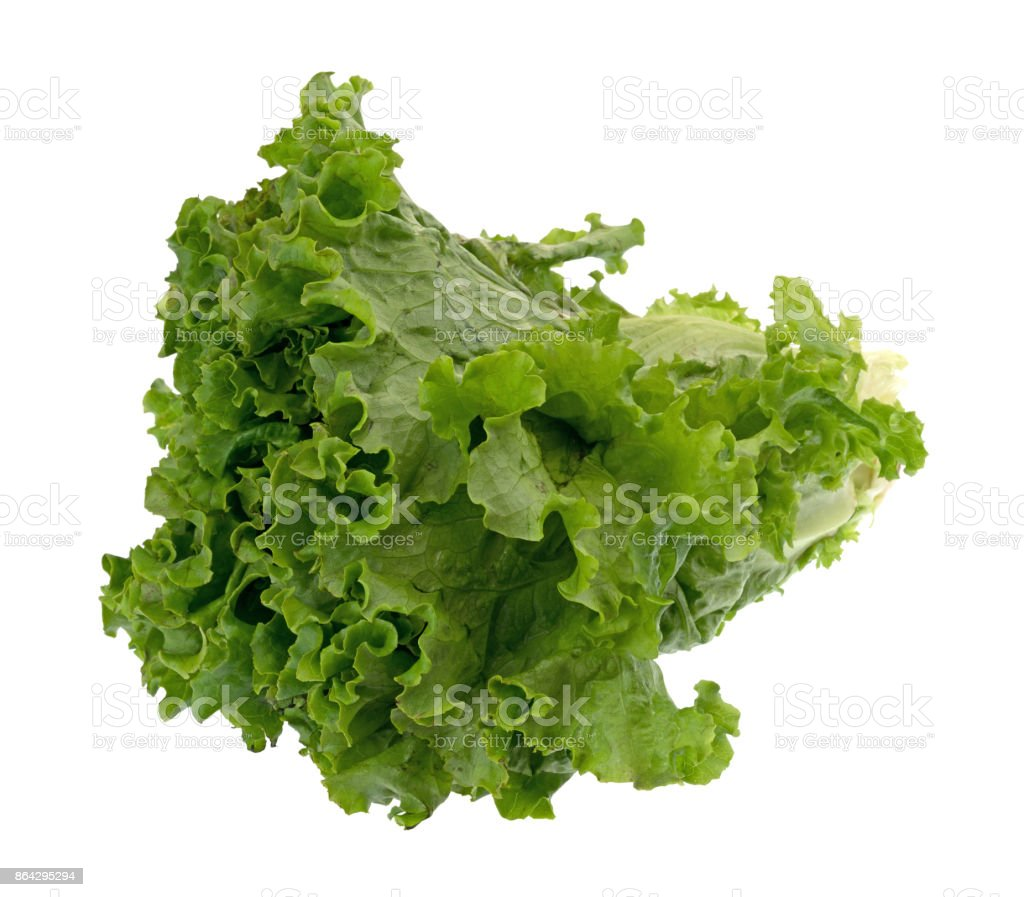 Head of green leaf lettuce on a white background royalty-free stock photo