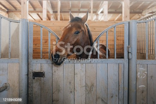 Head of horse looking over the stable doors on the background of other horses.