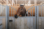 istock Head of horse looking over the stable doors on the background of other horses 1215945059