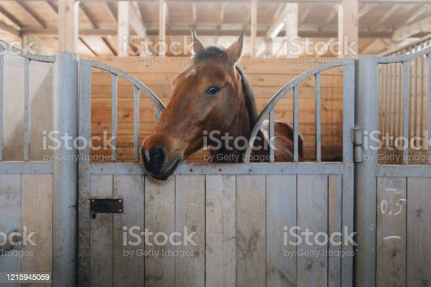 Head of horse looking over the stable doors on the background of picture id1215945059?b=1&k=6&m=1215945059&s=612x612&h=ylonmbvx ymiennlqneaqgg3jtrubjigiay6oauzixa=