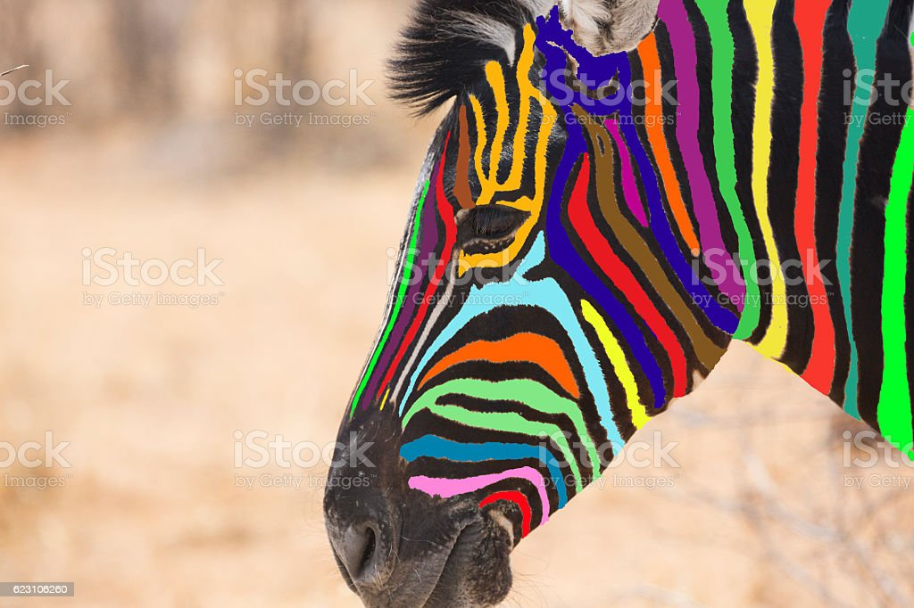 Head of multi colored zebra stock photo
